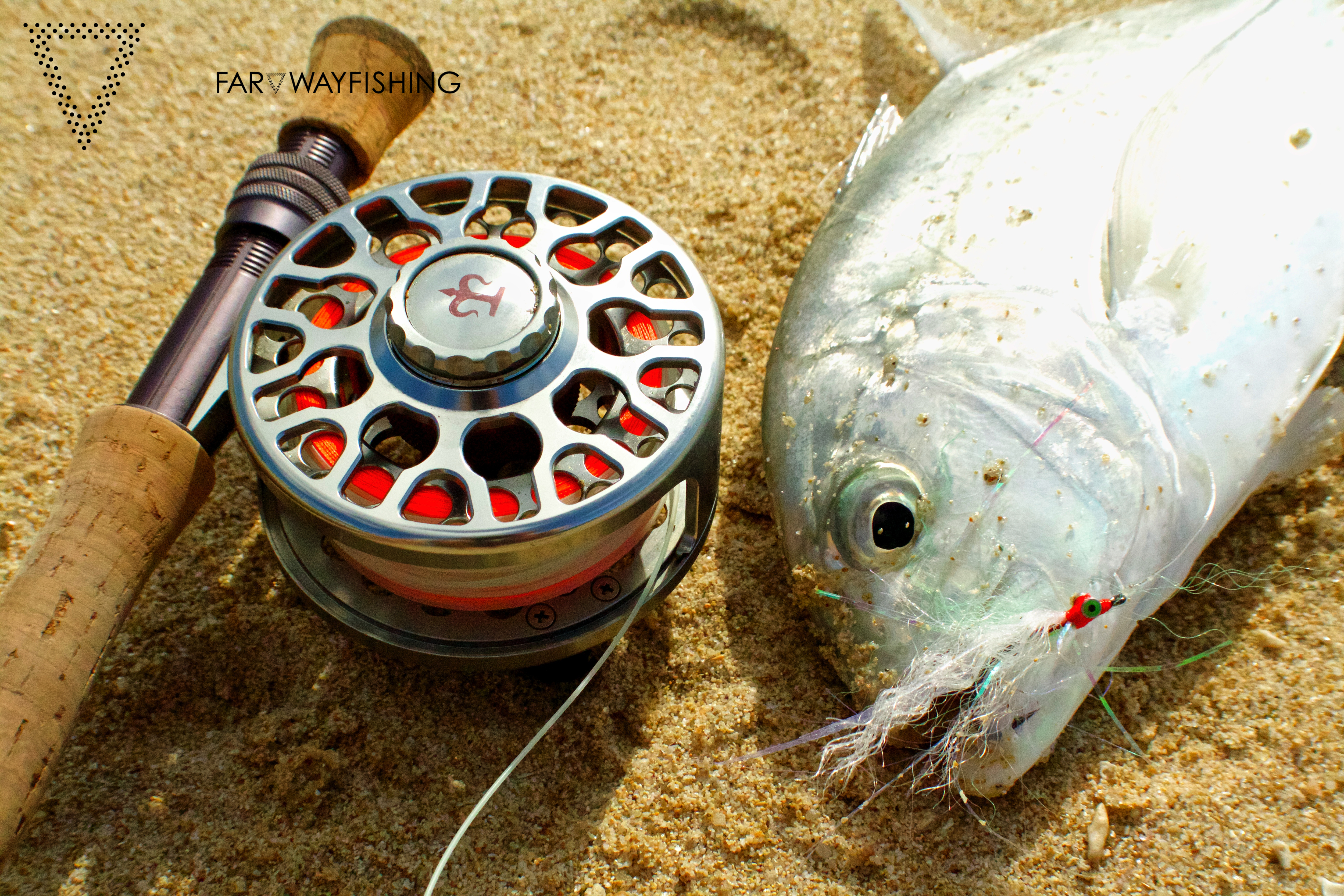 Baby Giant Trevally and 3-Tand TF70